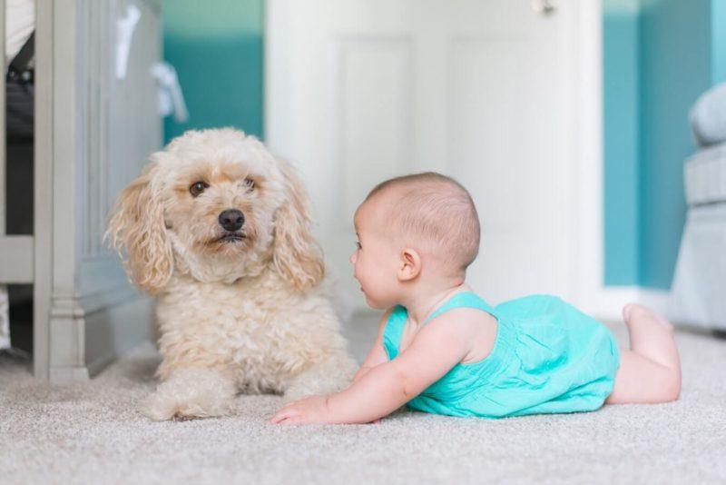 bebe y perro posando para foto